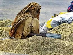 DISTRICT LUDHIANA WITNESS SMOOTH PADDY PROCUREMENT, 98 PERCENT LIFTED SO FAR