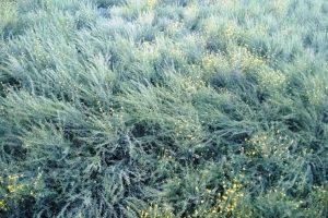 दिन में तेज धूप तथा रात को कम तापमान से फसलों में हो रहा है नुकसान