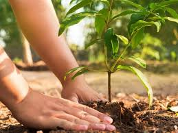 DISTRICT ADMINISTRATION TO START SPECIAL CAMPAIGN FOR PLANTING 550 SAPLINGS IN EVERY VILLAGE- DC