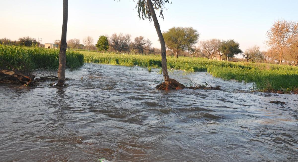 पथरवा में नहर टूटने से खेत हुए जलमग्र