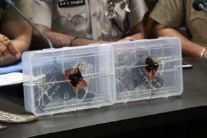 RURAL POLICE ARREST SEVEN ROBBERS, SEIZE PISTOLS, BULLETS