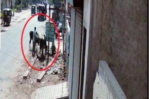 Litterbug caught in CCTV Camera, MC Ferozepur imposes penalty on DC's order