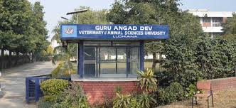 Vet Varsity extends last date to apply for Veterinary Course