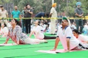Thousands perform yoga in Punjab, Haryana