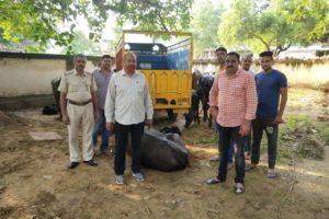 सीआईए पुलिस ने क्षेत्र में हुई भैंस चोरियों में 9 भैंसें बरामद करने में पाई कामयाबी