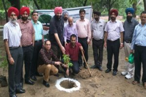 6000 saplings planted in offices of PSPCL Central zone