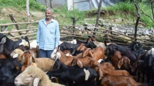 'Bhed Palak' initiative changes the life of rural Himachal
