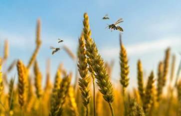 More areas under Summer Crops over last year, procurement to rises despite lockdown