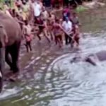WAP calls for stringent action against culprits who killed Elephant in Kerala