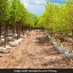 Haryana to plant one crore trees in the state