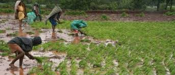 Lack of migrants challenge to farmers