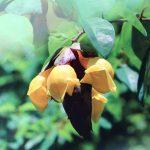 "GNDU compiled a Handbook on ""Plant Diversity of GNDU Botanical Garden"":"