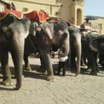 Report-Elephants not commodities—presents dismal conditions of elephants in Asia