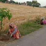 1780 Van Mitras Project 4.89 Lakh saplings in Villages of Jalandhar Distt : Ghanshyam Thori
