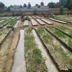 22 Nurseries costing Rs 1.35 Cr to come up at Jalandhar
